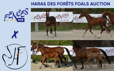 Haras des Forêts Foals Auction